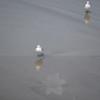 tybee island 3-7-2010 155