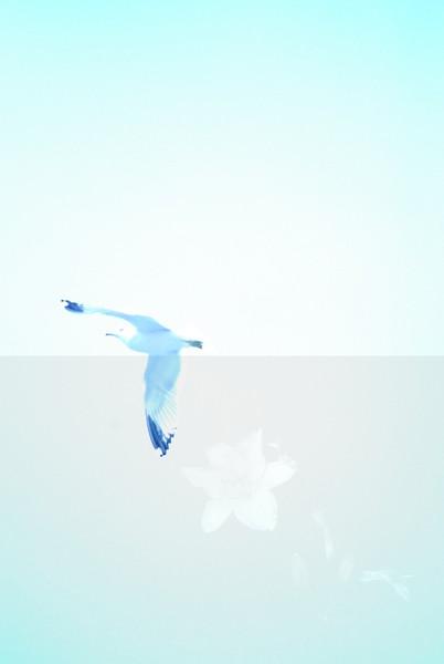 tybee island 3-7-2010 012