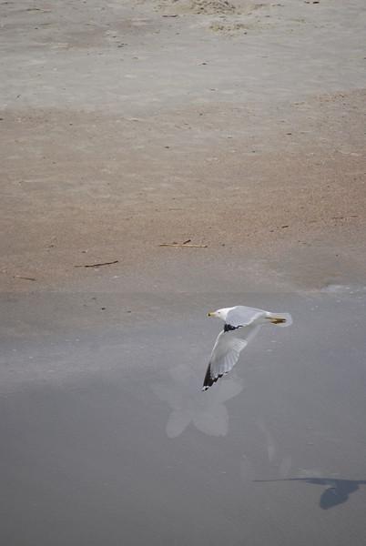 tybee island 3-7-2010 162