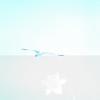 tybee island 3-7-2010 006