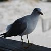 tybee island 3-7-2010 054