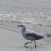 Tybee Island Fun 7-6-2009-7-7-2009 367