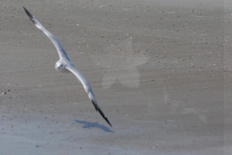 Tybee Island Fun 7-6-2009-7-7-2009 343