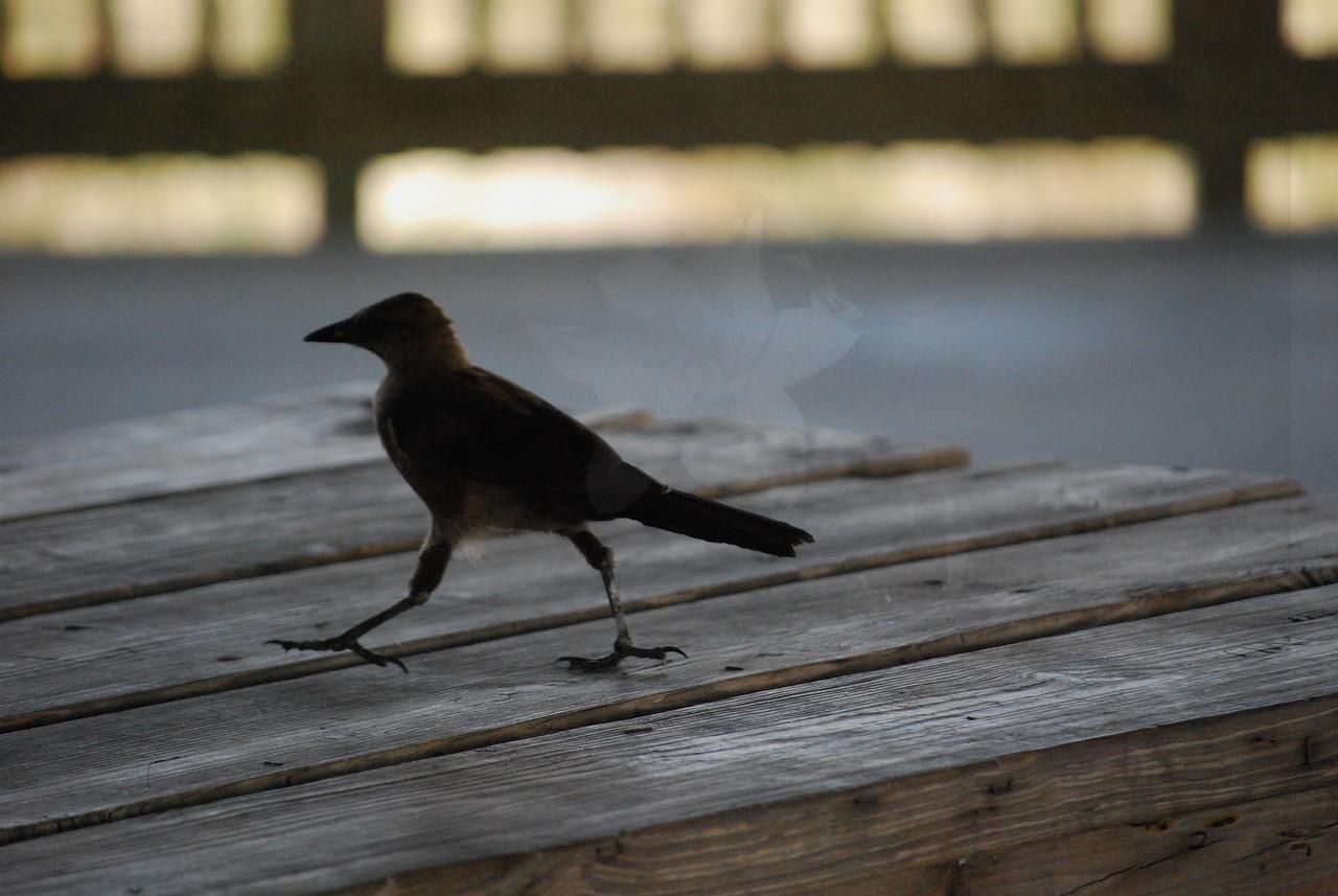 Tybee Island Fun 7-6-2009-7-7-2009 214