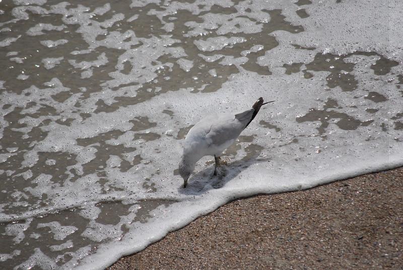 tybee island 3-7-2010 146