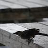 Tybee Island Fun 7-6-2009-7-7-2009 129
