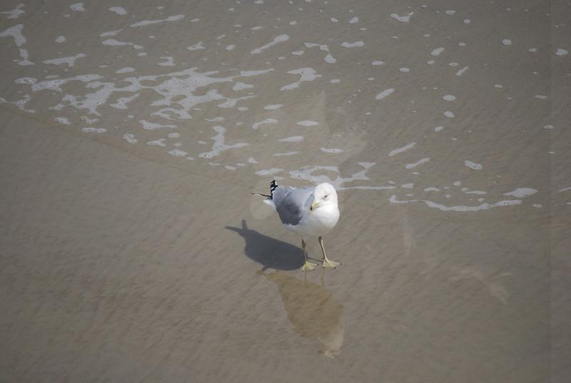 tybee island 3-7-2010 152