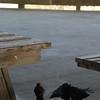 Tybee Island Fun 7-6-2009-7-7-2009 248