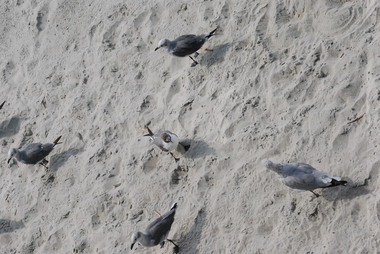 Tybee Island Fun 7-6-2009-7-7-2009 255