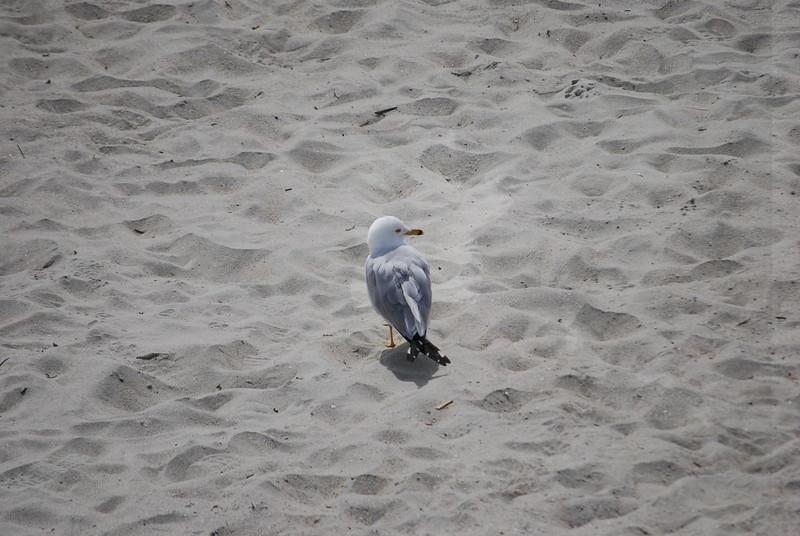 tybee island 3-7-2010 130
