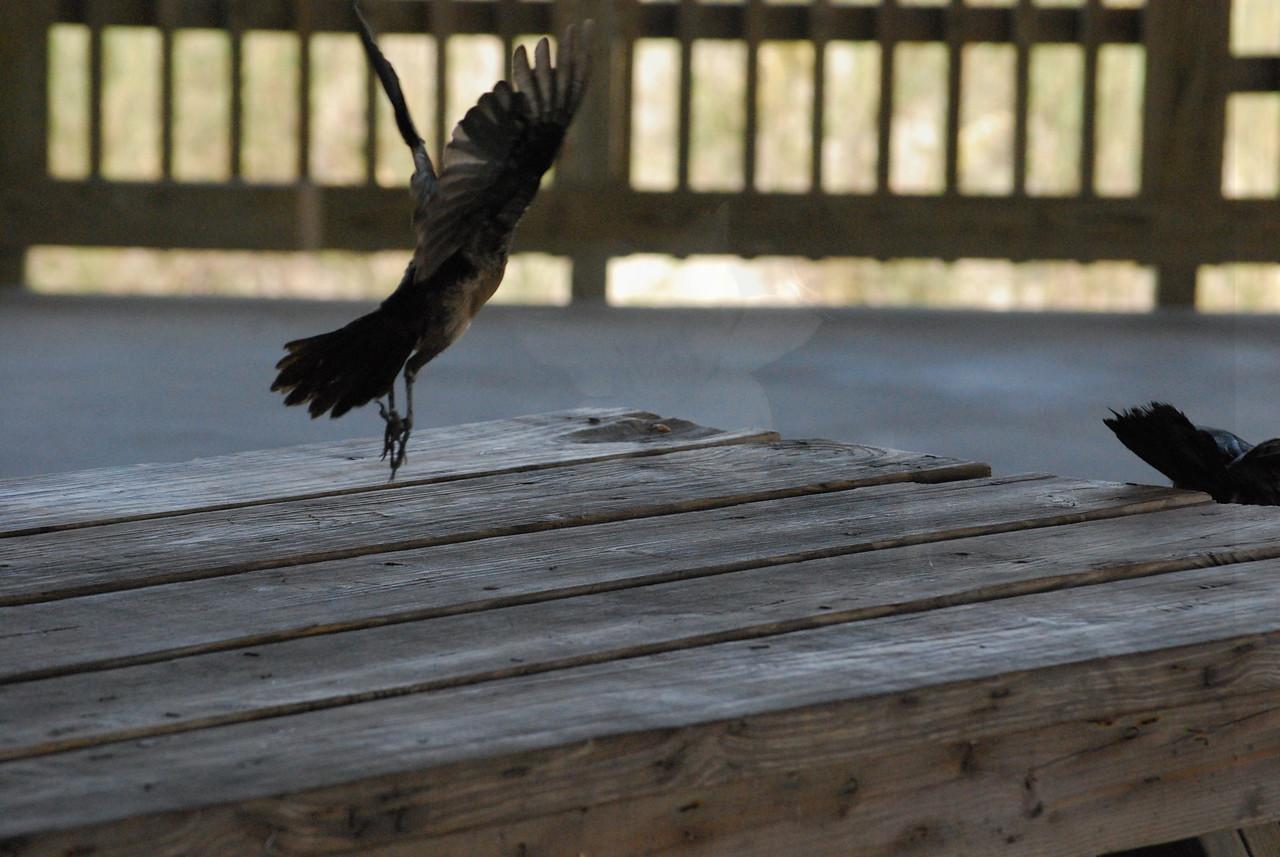 Tybee Island Fun 7-6-2009-7-7-2009 136