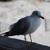 tybee island 3-7-2010 059