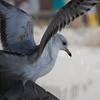tybee island 3-7-2010 112
