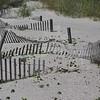 7-7-2009 Tybee Island 004
