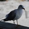tybee island 3-7-2010 056