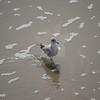 tybee island 3-7-2010 148