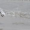 Tybee Island Fun 7-6-2009-7-7-2009 369