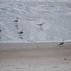 tybee island 3-7-2010 134