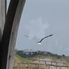 Tybee Island Fun 7-6-2009-7-7-2009 250