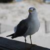 tybee island 3-7-2010 063