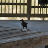 Tybee Island Fun 7-6-2009-7-7-2009 137