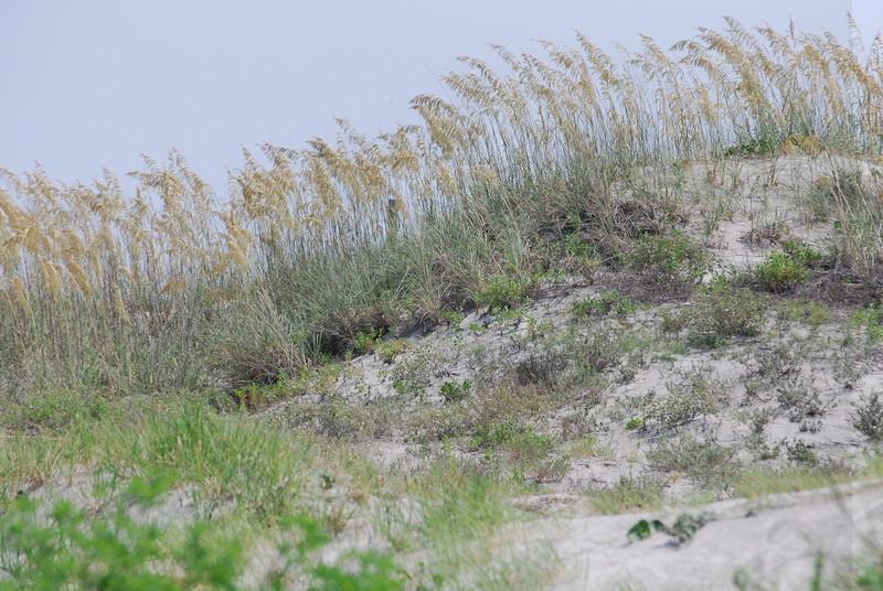7-7-2009 Tybee Island 011