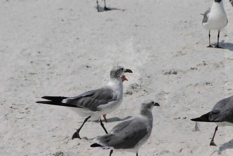 Tybee Island Fun 7-6-2009-7-7-2009 403