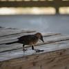 Tybee Island Fun 7-6-2009-7-7-2009 203