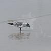 Tybee Island Fun 7-6-2009-7-7-2009 325