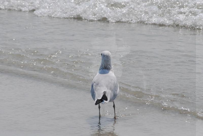 Tybee Island Fun 7-6-2009-7-7-2009 365