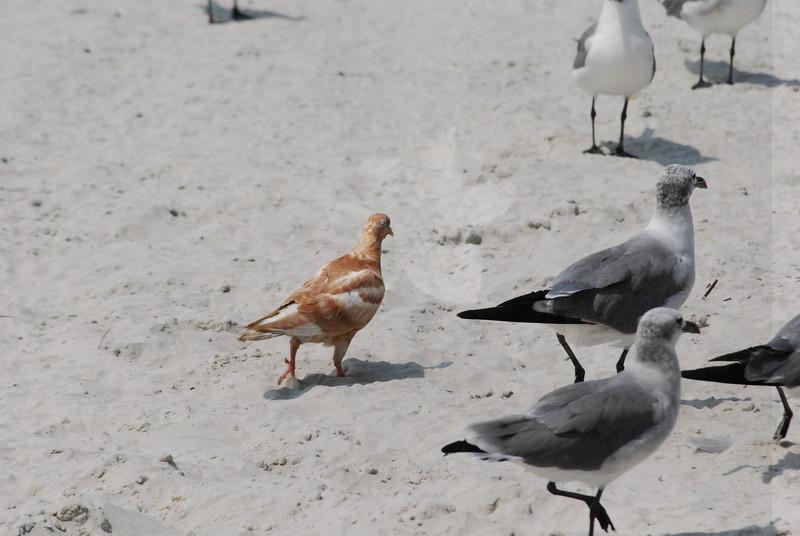 Tybee Island Fun 7-6-2009-7-7-2009 404