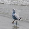 Tybee Island Fun 7-6-2009-7-7-2009 366