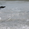 Tybee Island Fun 7-6-2009-7-7-2009 372
