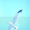 tybee island 3-7-2010 010