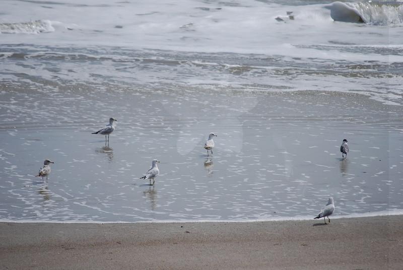 tybee island 3-7-2010 136