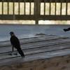 Tybee Island Fun 7-6-2009-7-7-2009 134