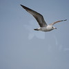 tybee island 3-7-2010 187