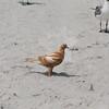 Tybee Island Fun 7-6-2009-7-7-2009 406