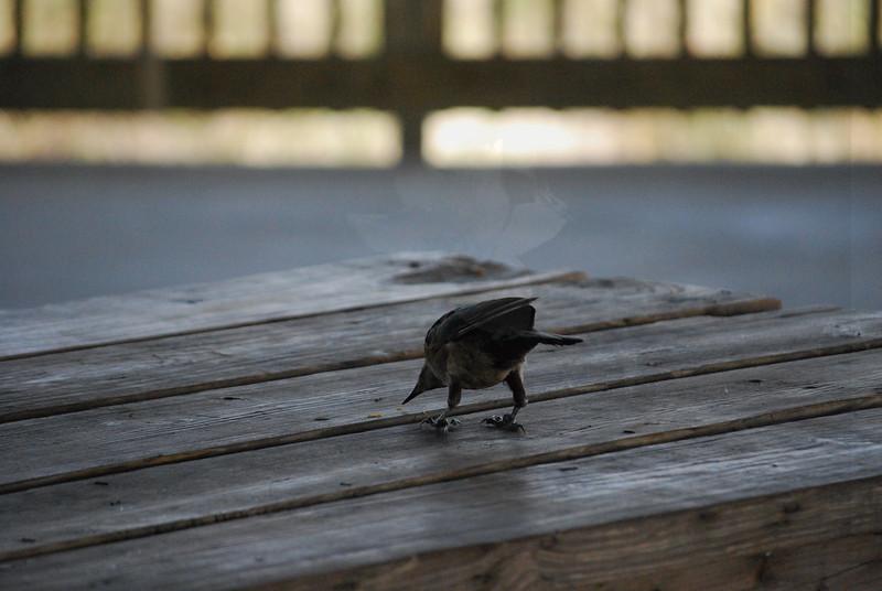Tybee Island Fun 7-6-2009-7-7-2009 162