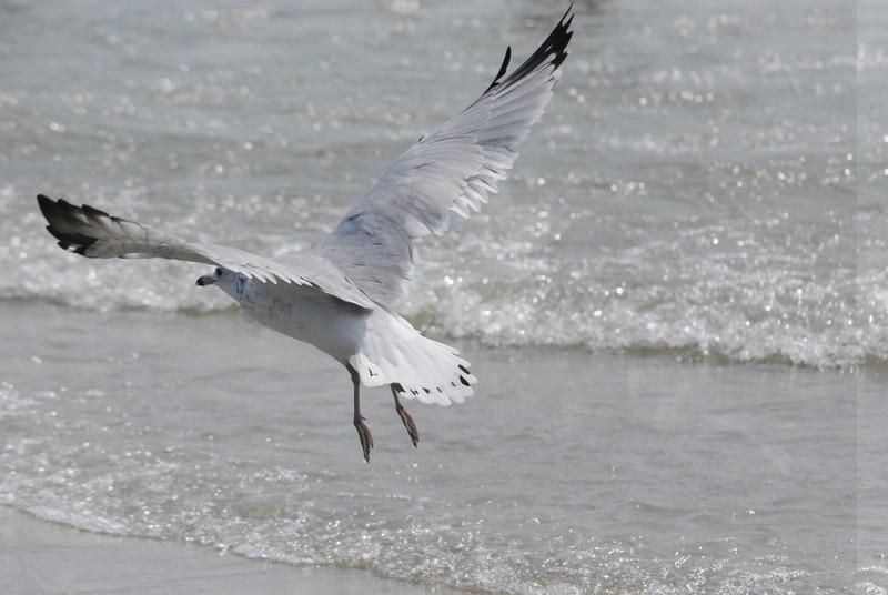 Tybee Island Fun 7-6-2009-7-7-2009 370