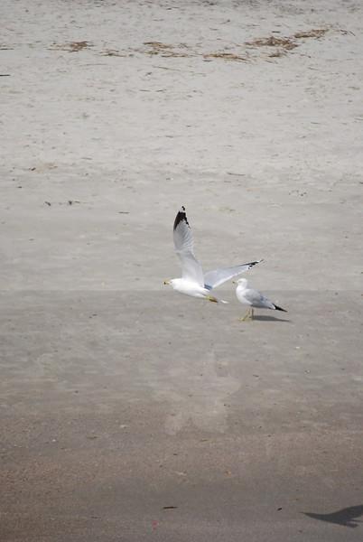 tybee island 3-7-2010 163