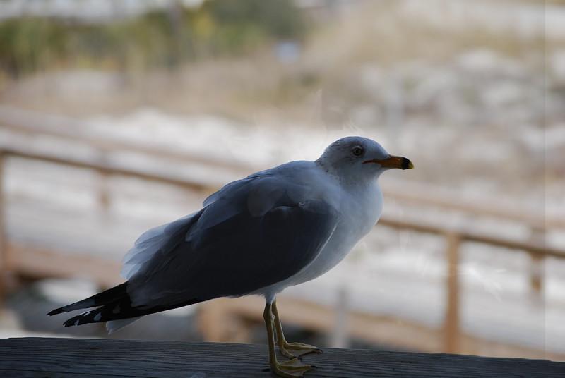 tybee island 3-7-2010 052