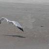 Tybee Island Fun 7-6-2009-7-7-2009 342