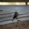 Tybee Island Fun 7-6-2009-7-7-2009 195