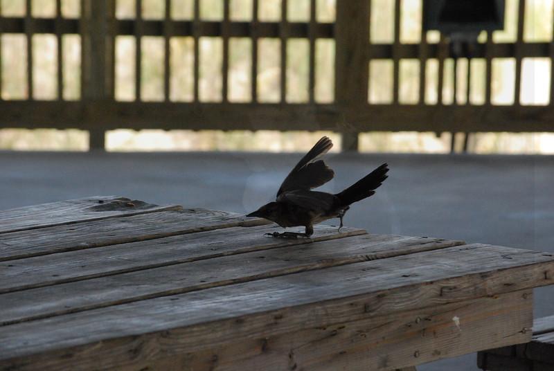 Tybee Island Fun 7-6-2009-7-7-2009 138