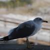 tybee island 3-7-2010 053