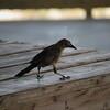 Tybee Island Fun 7-6-2009-7-7-2009 208