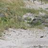 7-7-2009 Tybee Island 006
