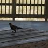 Tybee Island Fun 7-6-2009-7-7-2009 141