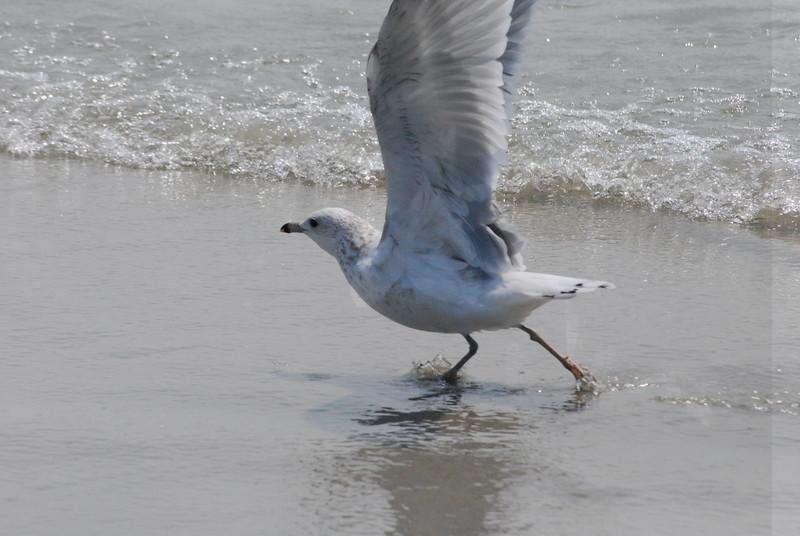Tybee Island Fun 7-6-2009-7-7-2009 368